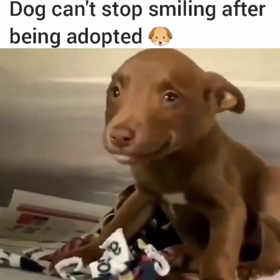 Dog Can T Stop Smiling After Being Adopted Dog Can T Stop Smiling After Being Adopted Cute Funny Animals Cute Animals Funny Animals