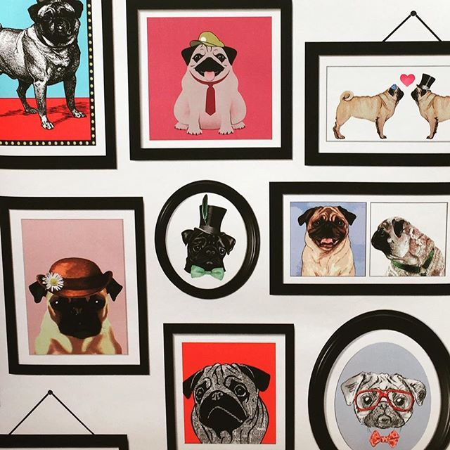 Pug wallpaper. Maybe a feature wall. pug diy