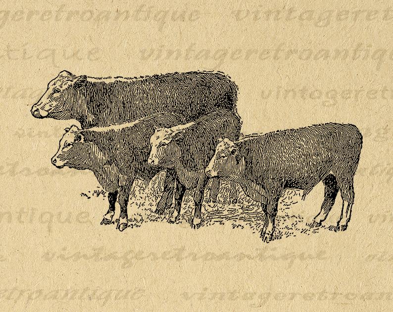 Printable Image Cows Antique Graphic Farm Animal Digital Download Vintage Clip Art Printable Digital Image Art V Clip Art Vintage Antique Artwork Cow Art