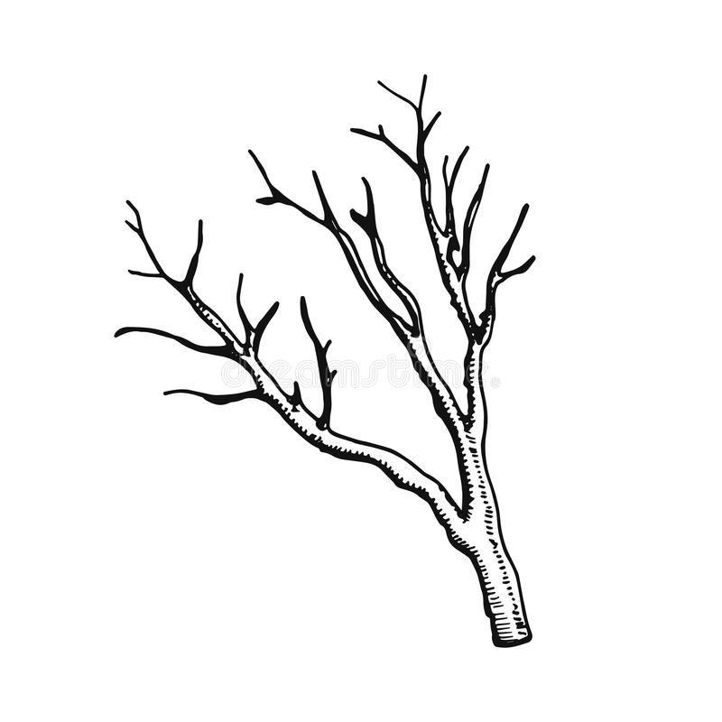 Rama Seca Dibujo Buscar Con Google Rama Seca Ramen Dibujos Sencillos