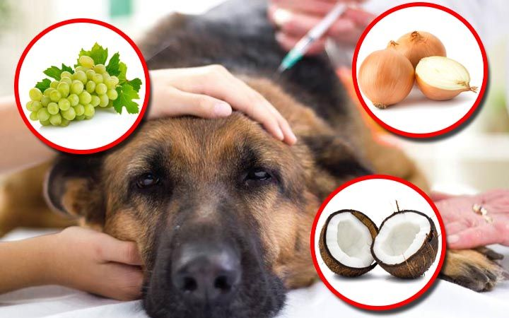 lifes abundance puppy food rating