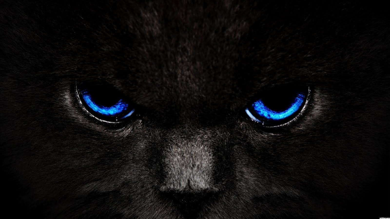 Black And Blue Background Wallpaper Black Cat Blue Eyes
