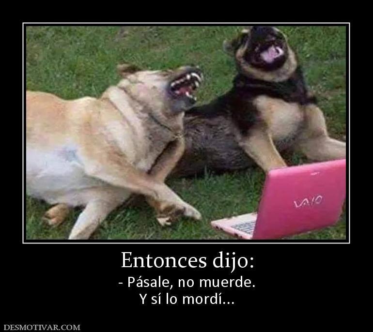 Entonces Dijo Pasale No Muerde Y Si Lo Mordi Animal Memes Funny Dogs Animal Humour Funny Animal Memes