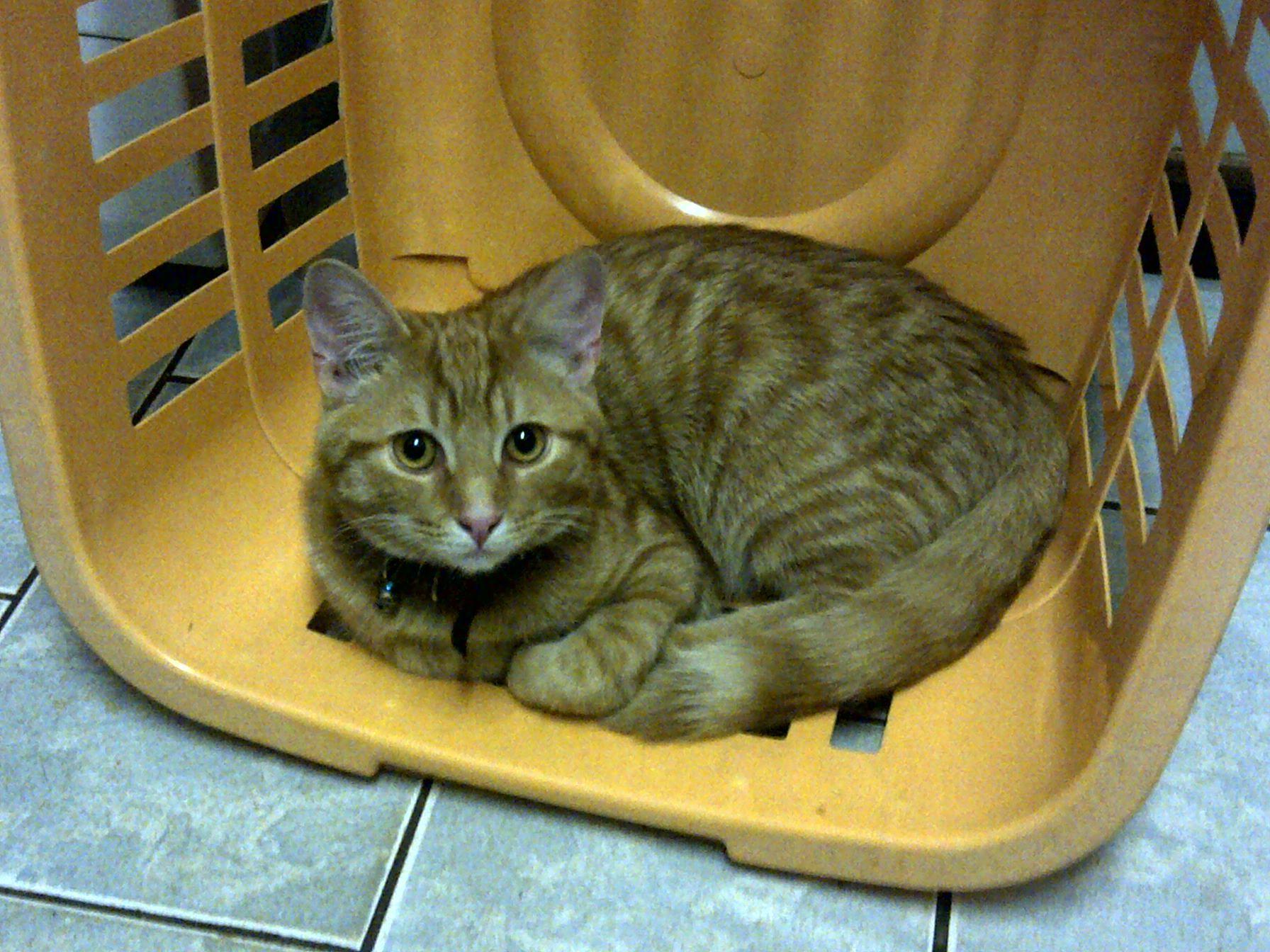 My new Kitty Gizmo