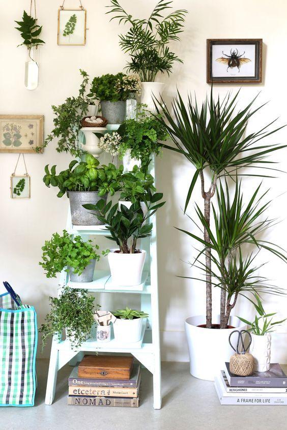 Escaleras como soporte para plantas estilo escandinavo - Plantas aromaticas interior ...