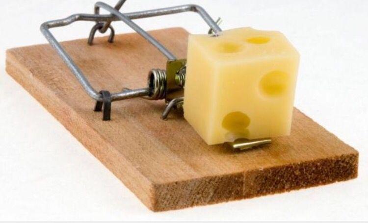 Mm Swiss Mouse Traps Mouse Bait Bait Trap