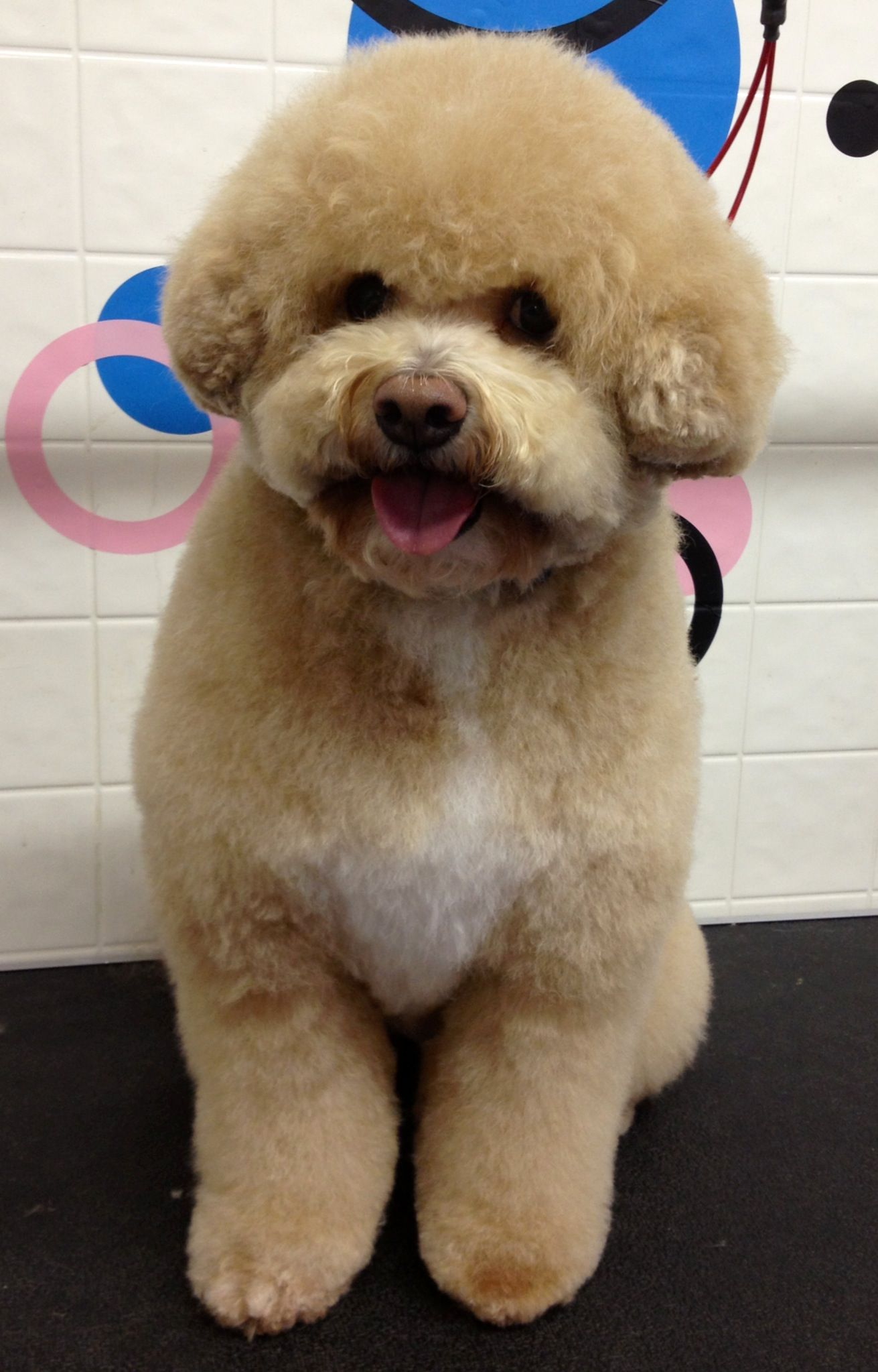 Pin by Bow Wow Dog Bakery on Client Photos | Dog grooming