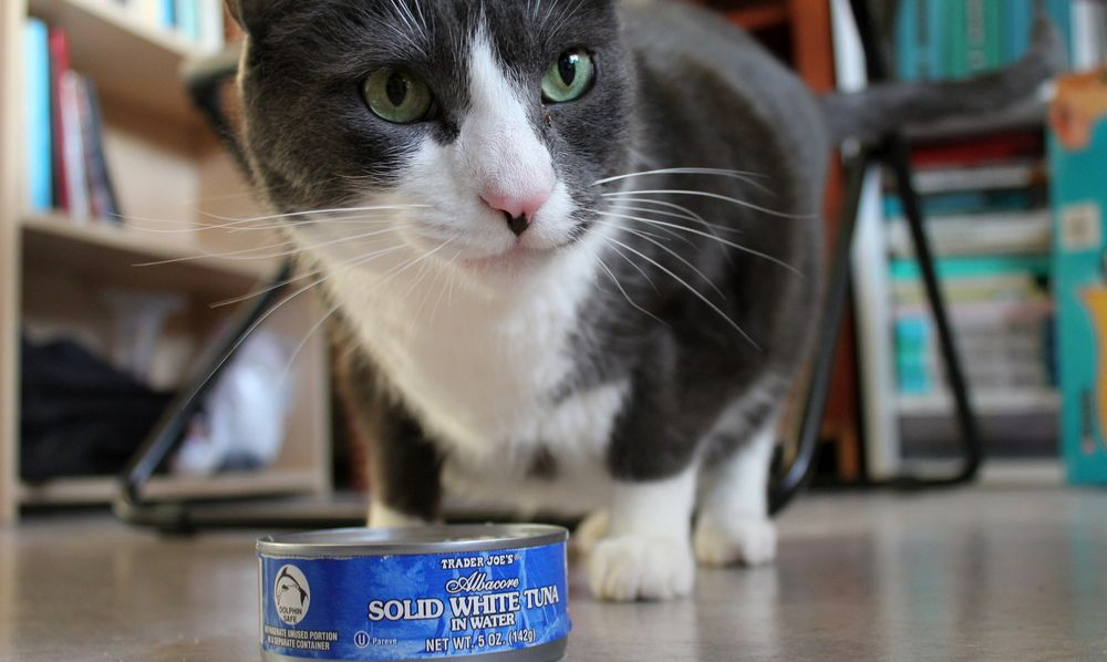 How Much Tuna Can a Cat Eat (With images) Cats tuna, Cat