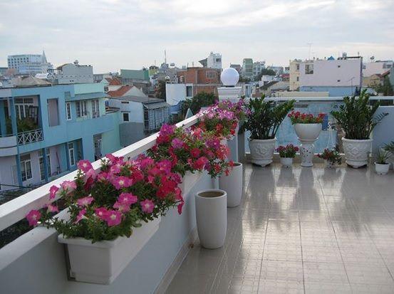 Cung cấp đủ ánh sáng cho cây cảnh đặt trong nhà - http://caycanhnoithat.vn/blog/cung-cap-du-anh-sang-cho-cay-canh-dat-trong-nha/