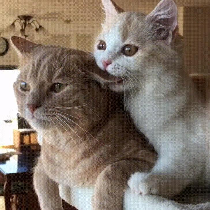 Latest Funny Pets Nom, Nom, Nom Nom, Nom, Nom  #funnypetgifs #funny #petgifs #gifs #cats #funnycats #funnycatgifs #kitten 3