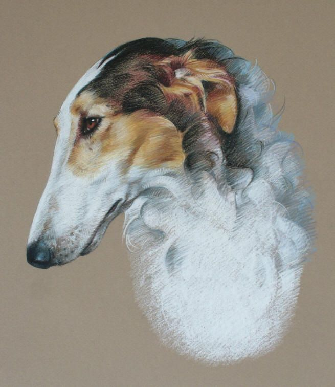 Borzoi Dog Portrait Drawing Dog Art Dog Portraits