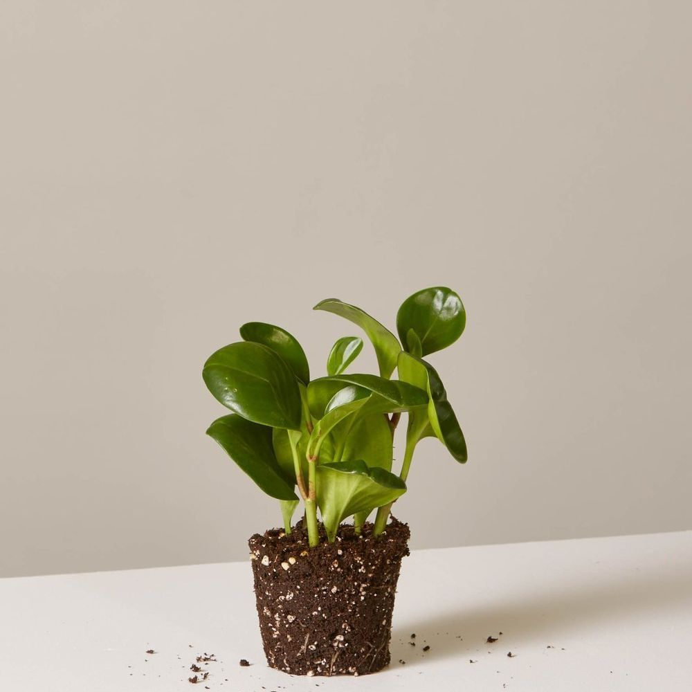 You Don\'t Need a Green Thumb to Take Care of These Hardy Indoor ...