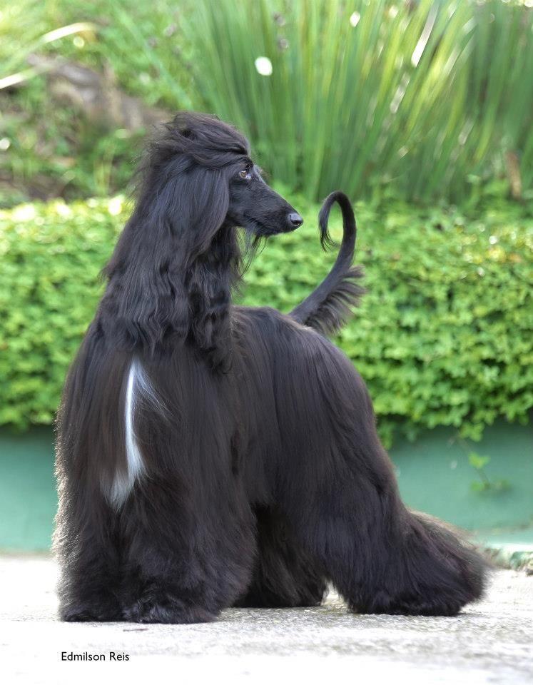Safiyeh Bitt Wasfi Von Haussman Fantastic Picture Of A Black