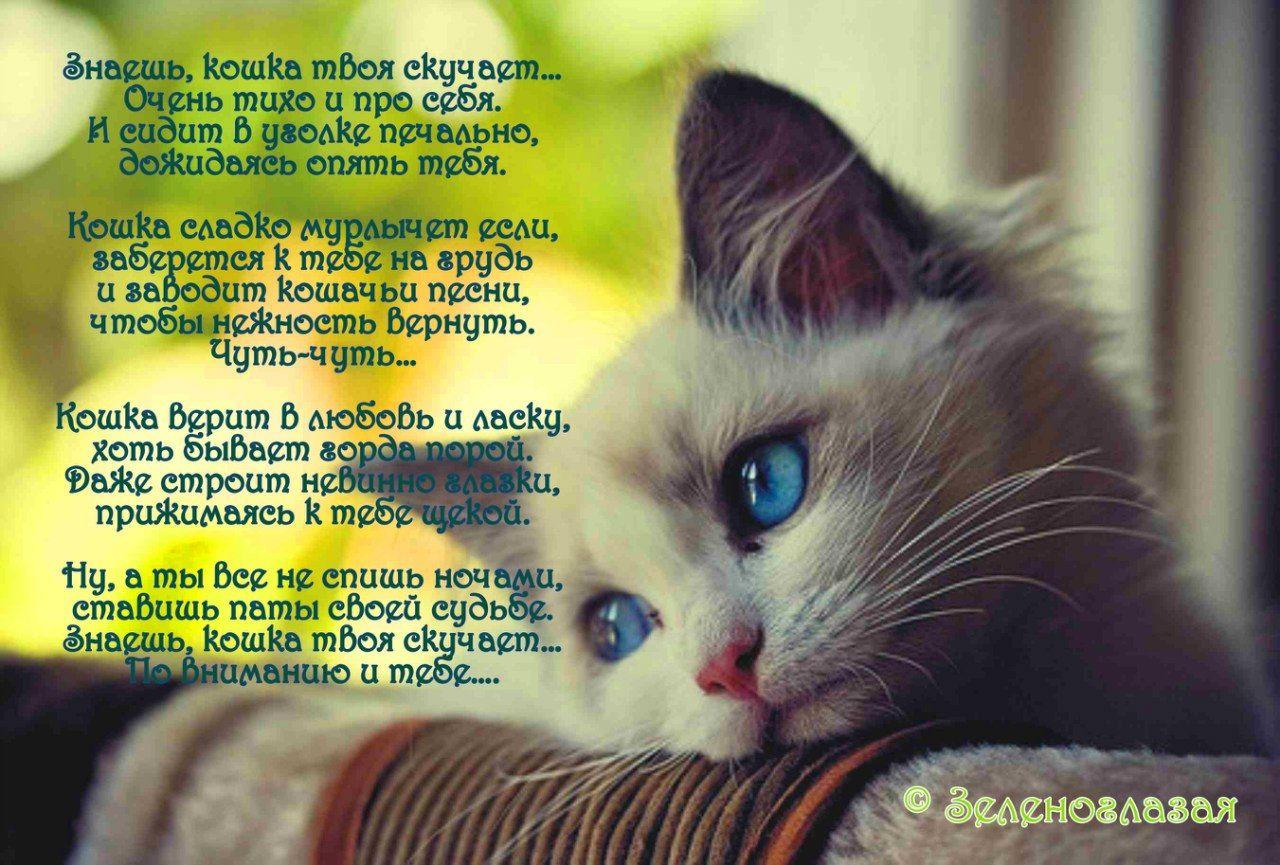 стихи про котика любимого никакой было, призналась