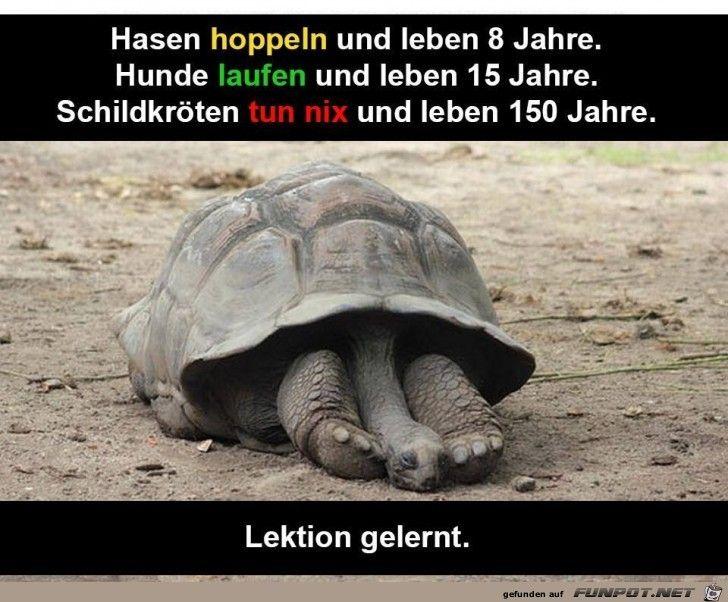 schildkröten sprüche Hasen, Hunde, Schildkröten | Sprüche | Pinterest  schildkröten sprüche