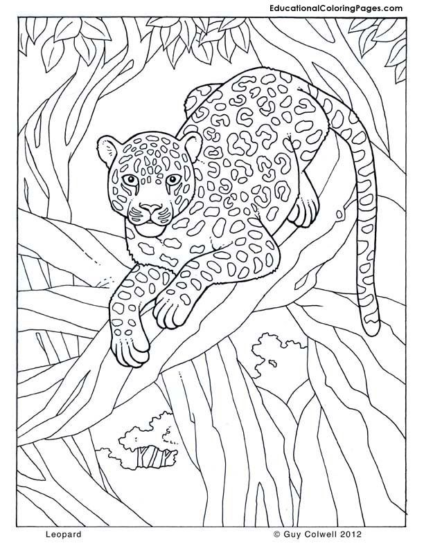 Leopard Coloring Tropical Pagesjungle Pages