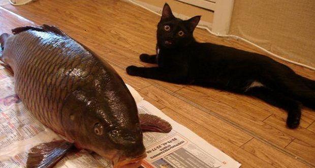 4 Jenis Makanan Kucing Terbaik Tazesiru Cat S House Makanan
