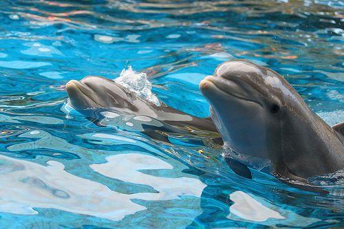 Dolphinsss!!!