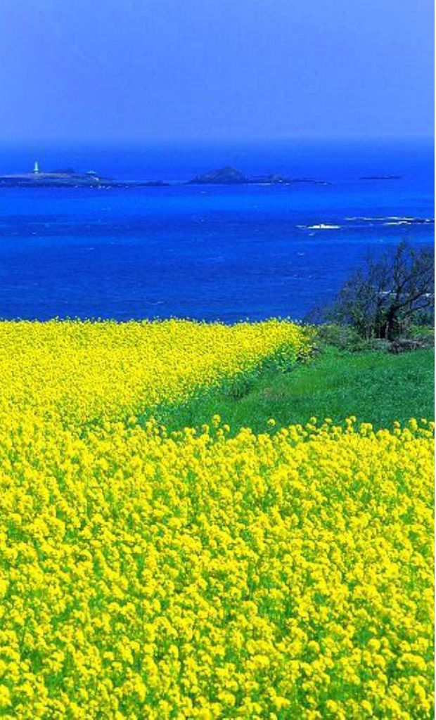 Jeju Island Korea Visit Http Asiaexpatguides Com And Make The