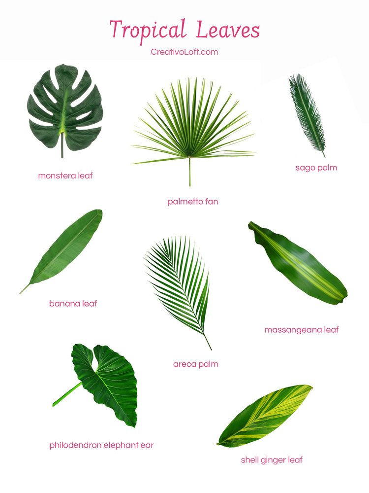 Various Popular Tropical Leaves For Floral Arrangements Tropical Flower Arrangements Tropical Floral Arrangements Tropical Leaves A wide variety of artificial tropical leaves options are available to you, such as material, occasion, and plant type. various popular tropical leaves for