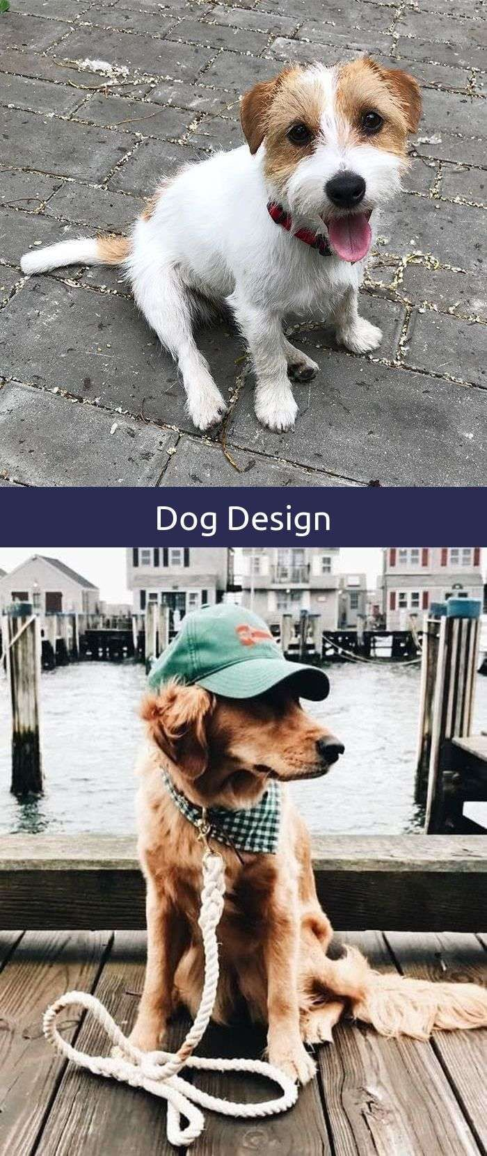 Creative Dogs Protecting Babies Dog Stuff To Get Dogs Dog