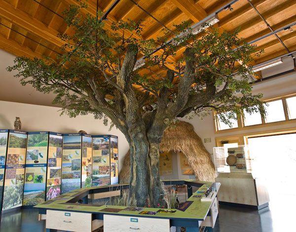 Environmental Nature Center Newport Beach Ca Oak Tree Nature Indoors Tree Sculpture Tree Wall Art