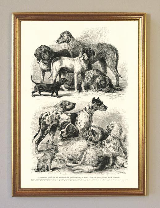 Hund Dachs Spitz Dogge Vorstehhund Nero um 1892 Faksimile BBB 6 im Goldrahmen de.picclick.com
