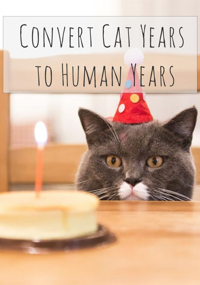 Calculate Cat Years In Human Years How To Know The Age Of A