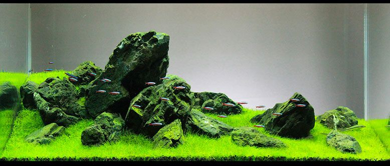 Good Read My Comprehensive Guide On Iwagumi Aquascaping Style