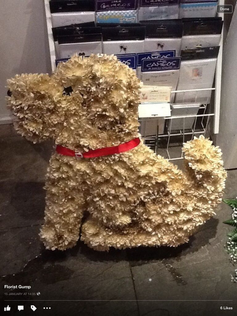 Dog funeral tribute pinterest funeral funeral flowers dog funeral tribute izmirmasajfo