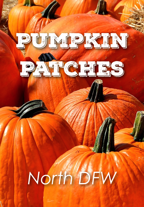 Pumpkin patches dfw | dallas & fort worth family fun | pinterest.