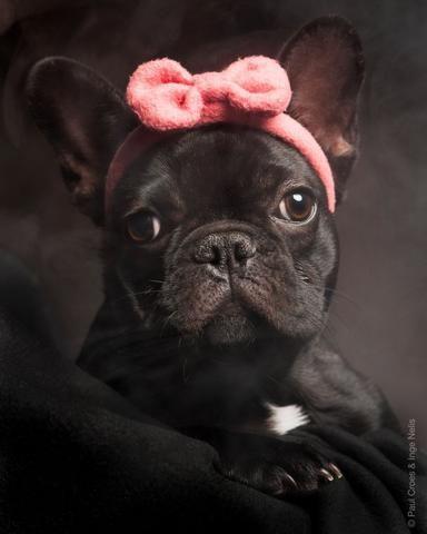 French Bulldog By Paul Croes Inge Nelis 2013 Belgium Cute