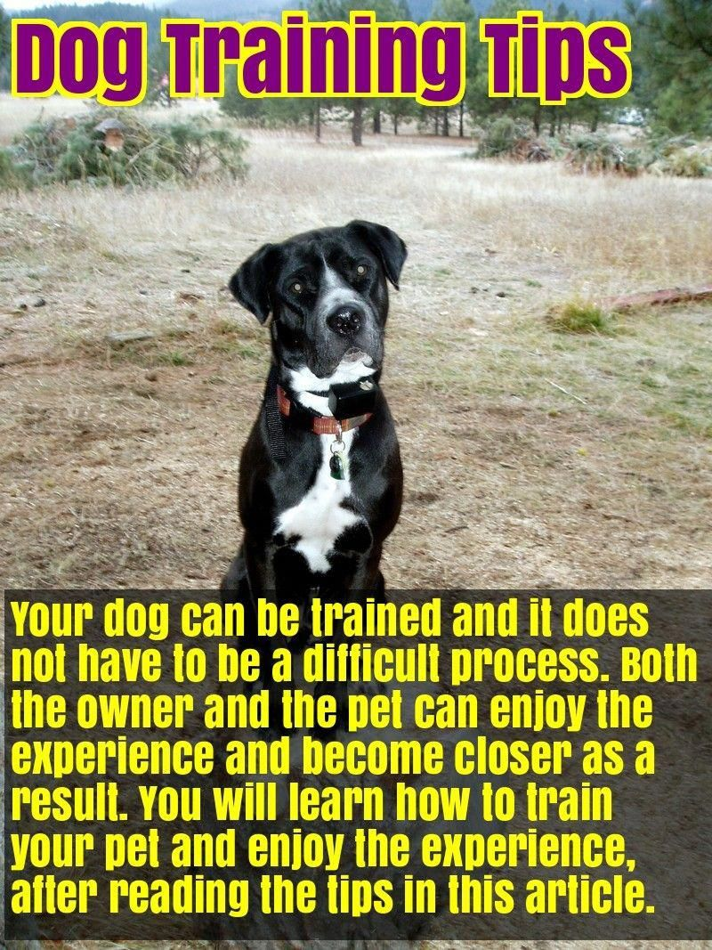 12 Signs Your Dog Is Happy Dog Training Tips Happy Dogs