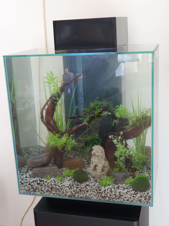 my first aquarium, fluval edge 2 | Fish plants, Betta fish ...