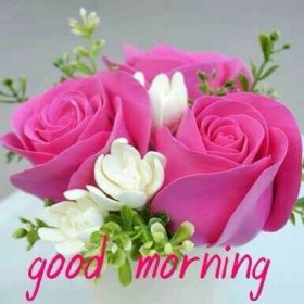 Pin By Avdhesh Singh On Good Morning Rose Good Morning Roses Good Morning Flowers Good Morning Images Flowers