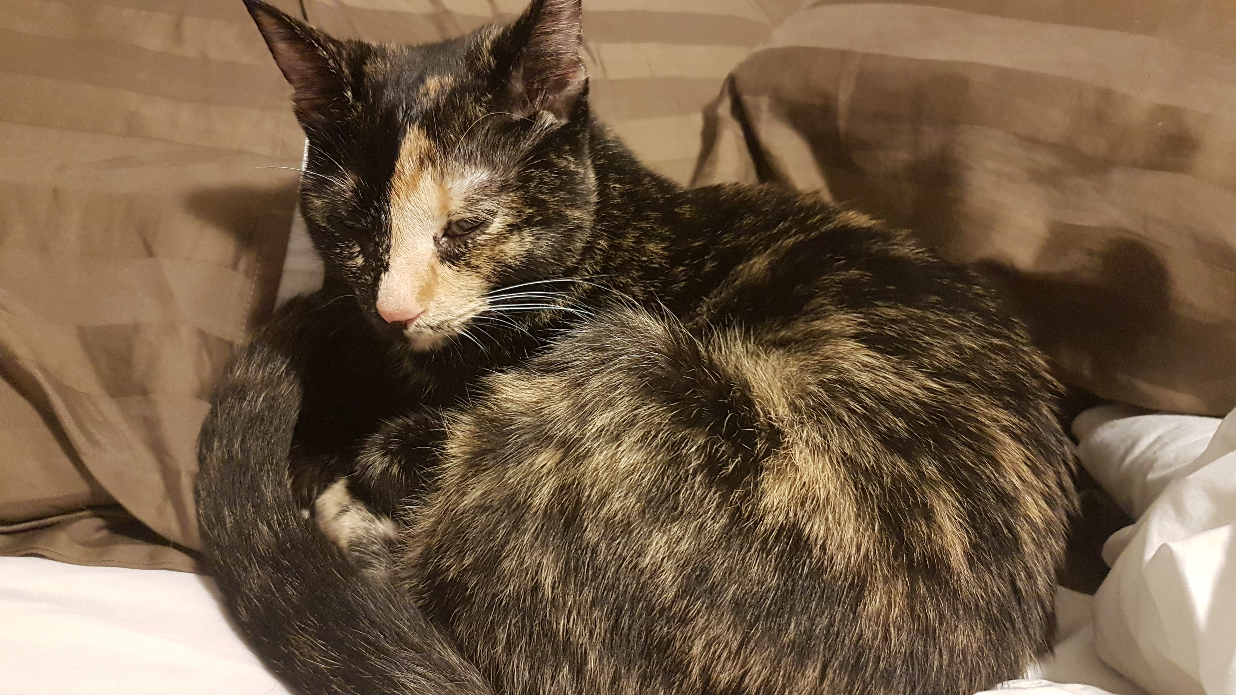 My Kitten Is Sick And Has Been Since Last Wednesday The Vet Didn T Tell Us Much Seems Like Upper Respiratory With Details In The Album Kitten Vets Cute Cat