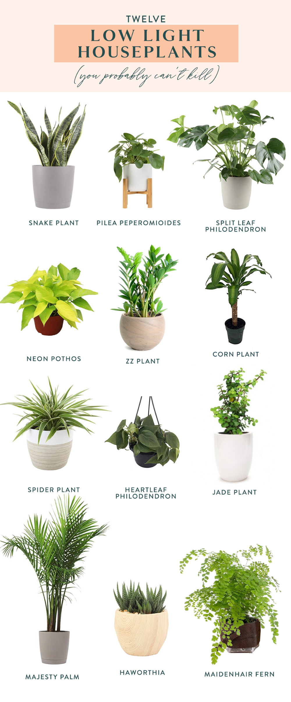 Twelve Low Light Indoor Plants You Probably Can't Kill ...