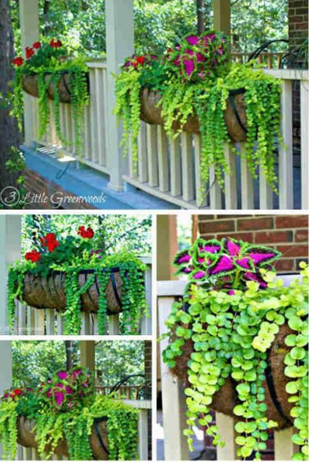 Pin By Woman In Watercolor On Gardening Plants For Hanging