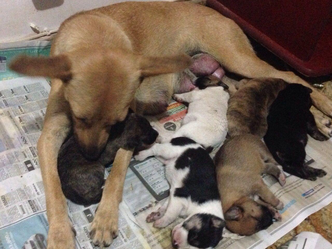 Cadelinha e filhotes resgatados no dia 03/11/14. Filhotes com 7 dias, na ocasião. São 4 machos e 2 fêmeas que estarão disponíveis para adoção logo após completarem 45 dias e já terem tomado a primeira dose de vacina V10