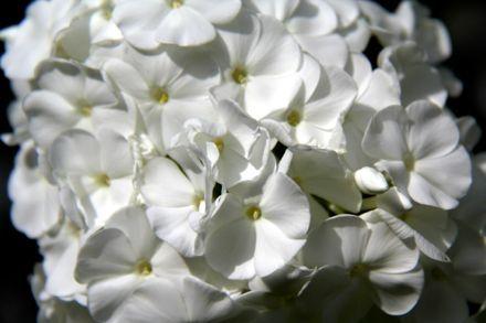 Explore White Flowerore