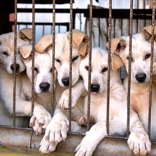 A Vital Step Towards This Goal Is The Legal Recognition Of All Dogs As Companion Animals Protected From Cruelty Dogs Animal Companions Animals