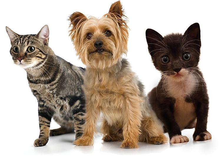 Dog Training Collar Dia Del Animal Gatos Tragos