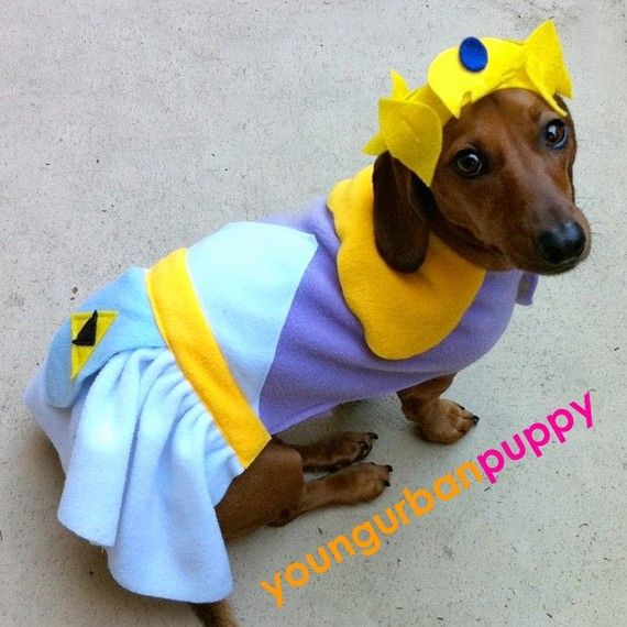 Image result for dachshund dressed like zelda