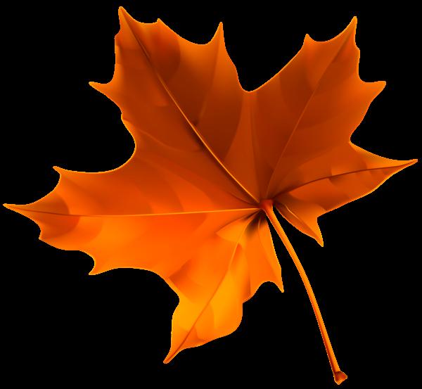 Autumn Red Leaf PNG Clipart Image | Σχέδια