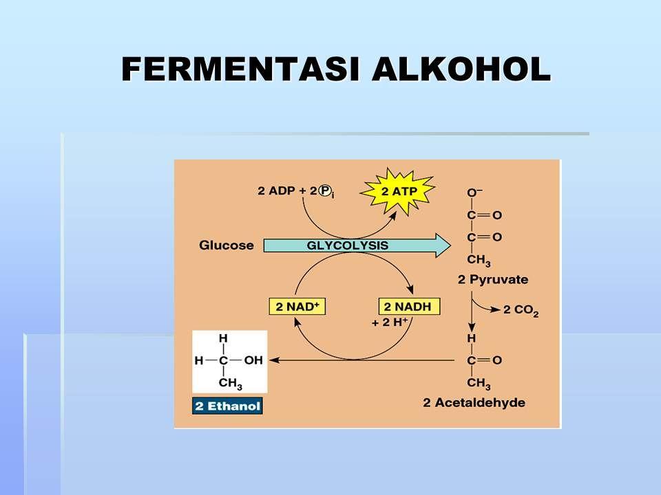 Enzim dan metabolisme sel katabolisme dan anabolisme grab book enzim dan metabolisme sel katabolisme dan anabolisme grab book ccuart Choice Image