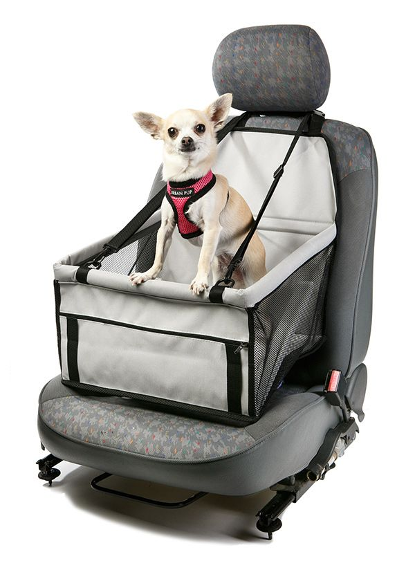Car Seat Dog Cradle. I think Tilly would