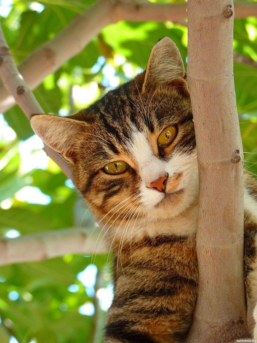 Кошка сидит на дереве с серьёзным выражением морды ...