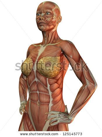 Anatomy Of The Female Chest Muscles Google Search Inside Out