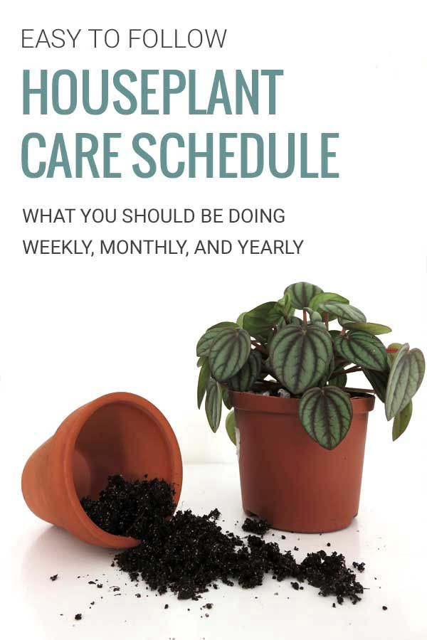 Beginners Guide to Basic Houseplant Care ZIMMERPFLANZEN