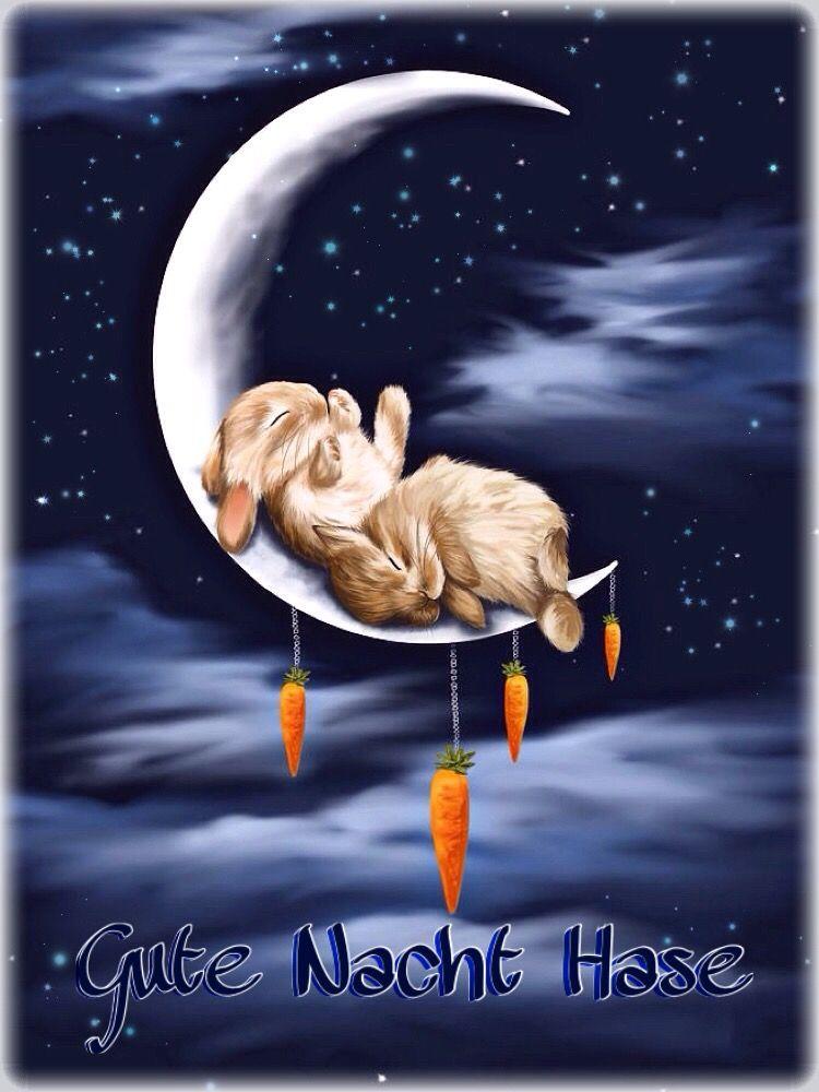 gute nacht hase gute nacht abendstimmungen cute bunny bunny art und animals beautiful. Black Bedroom Furniture Sets. Home Design Ideas